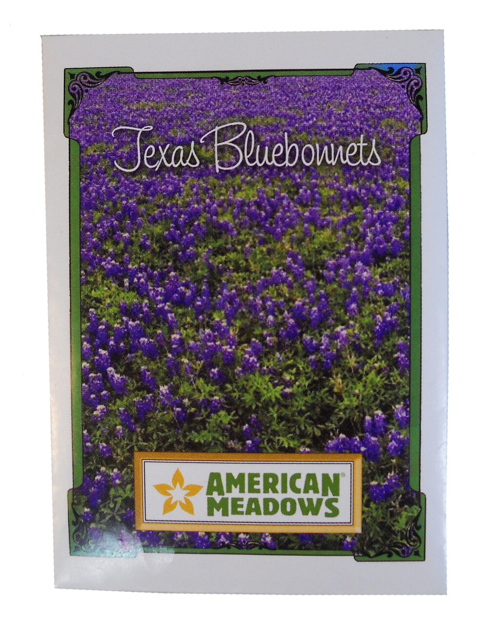 Bluebonnet Seeds 1